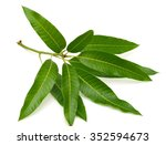 green leaves mango isolated on... | Shutterstock . vector #352594673