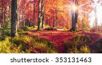 beech forests in the reserve... | Shutterstock . vector #353131463