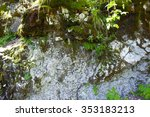 The Moss And Lichen On A Rock...