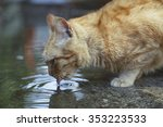 A Stray Cat Drinking Water Fro...