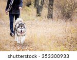 Stock photo man walking with a dog husky 353300933