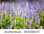 lavender flowers field in the... | Shutterstock . vector #353338157