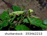 praying mantis  wildlife insect ... | Shutterstock . vector #353462213