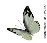 Small photo of Lesser Albatross (Appias wardii) in narual color profile, small butterfly of the Family Pieridae, the beautiful white butterfly isolated on white background