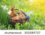 red rabbits outdoor | Shutterstock . vector #353589737