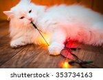 White Cat Licks And Sniffs...