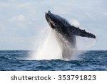 humpback whale jump. madagascar....   Shutterstock . vector #353791823