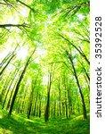 forest | Shutterstock . vector #35392528