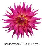 pink dahlia flower isolated on... | Shutterstock . vector #354117293