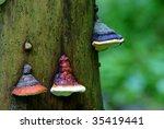 Polypore  Polyporous Fungus ...