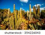 Cactus Garden In San Nicolas O...