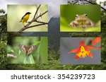 neotropical biodiversity of... | Shutterstock . vector #354239723