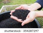 black sesame seeds in hands | Shutterstock . vector #354287297