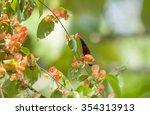bird and flower  purple... | Shutterstock . vector #354313913