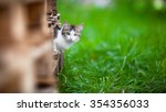 Adorable Kitten Outdoors