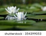 white water lily | Shutterstock . vector #354399053