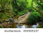 Small Forest Stream In A Green...