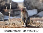 the monkey | Shutterstock . vector #354950117