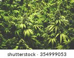 Background Texture Of Marijuan...