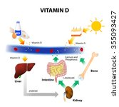 vitamin d. foods contain... | Shutterstock .eps vector #355093427