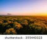 yellow rape flowers are lit by... | Shutterstock . vector #355440323
