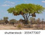 2 Giraffes Under A Tree In...