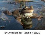 he common frog  rana temporaria ... | Shutterstock . vector #355571027