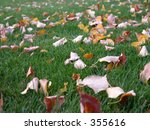 Leaves On The Lawn.