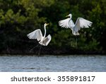 the fighting great egrets  ... | Shutterstock . vector #355891817