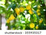 Bunch Of Fresh Ripe Lemons On ...