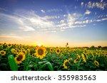 Iowa Sunflower Field At Sunset