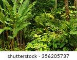 rainforest near cairns  north...   Shutterstock . vector #356205737
