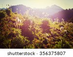 mountain meadow in sunny day | Shutterstock . vector #356375807