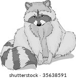 raccoon vector illustration | Shutterstock .eps vector #35638591