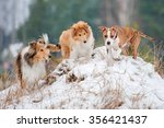 Stock photo american staffordshire terrier puppy playing with rough collie puppies in winter 356421437