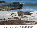 male southern elephant seal ... | Shutterstock . vector #356813603