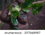 orangutan preventive from... | Shutterstock . vector #357068987