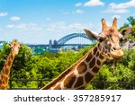 Sydney  Australia   January 11...