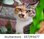 A Tricolor Cat Sitting Behind...