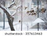Birds Feeding In An Urban...