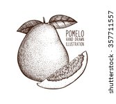 ink hand drawn pomelo  isolated ... | Shutterstock .eps vector #357711557
