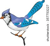 Blue Jay Bird. Vector. Isolate...