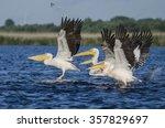 pelicans taking off in a... | Shutterstock . vector #357829697