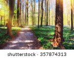 Footpath In Spring Forest...