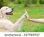 Stock photo golden retriever dog giving paw high five owner closeup photo 357985937
