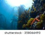seaweed | Shutterstock . vector #358066493