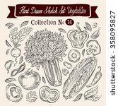 vegetables   celery  cucumber ... | Shutterstock .eps vector #358095827