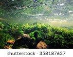 Underwater Scenery  Algae ...