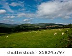Pasture With Sheep In Ireland
