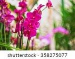 pink orchids at botanical garden | Shutterstock . vector #358275077